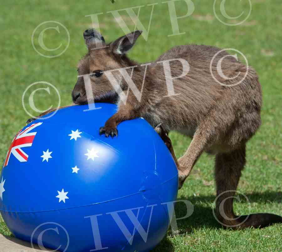 Ballarat Wildlife Park 24jpg