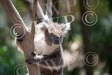 Ballarat Wildlife Park 21jpg